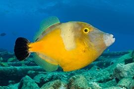Bahamas - Arrecifes