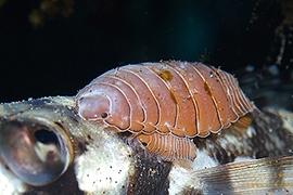 Invertebrados - Varios