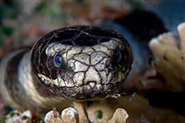 Serpientes Marinas