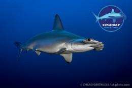 Shark_Tour_Mar_Rojo