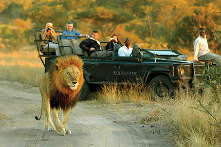 timbavati_kingscamp_0028