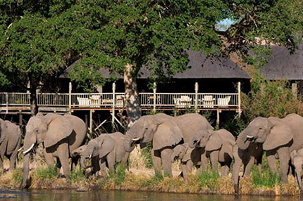 bush_lodge_sabi_0001