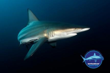 Shark_Tour_Sudafrica