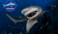Shark_Tour_FIJI