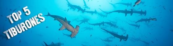 Cabecera_top5_tiburones