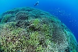 Corales y Arrecifes