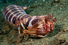 Crustáceos - Otros