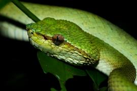Reptiles y Batracios